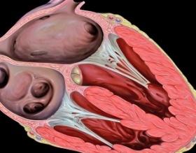 Pesquisa revela mecanismo molecular que leva à insuficiência cardíaca