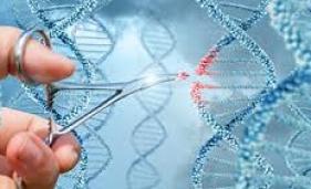 Nova técnica de edição genética evita mutações involuntárias