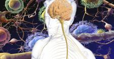 Tratamento de esclerose sistêmica destrói e reconstrói sistema imune